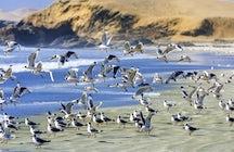 Paracas Reserve: deserts, past civilizations' mysteries & wildlife
