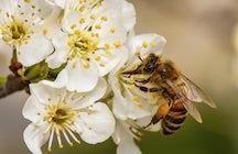Honeyland: Beekeeping in Slovenia - Part1