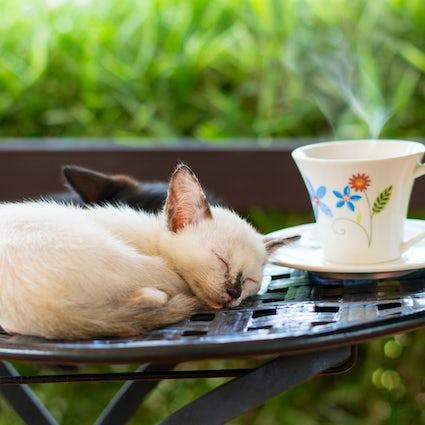 La Pisici - um lugar para beber café e estragar os gatinhos