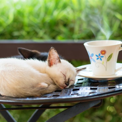 La Pisici - a place to drink coffee and spoil the kittens