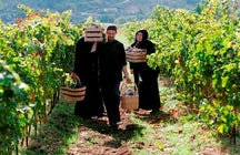 Tvrdoš Winery & its gold-winning wines made by monks