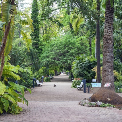 Valencia's Botanical Garden and the city's best cake