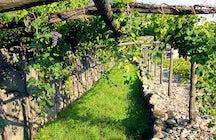 En las rutas del vino de Italia: Aosta