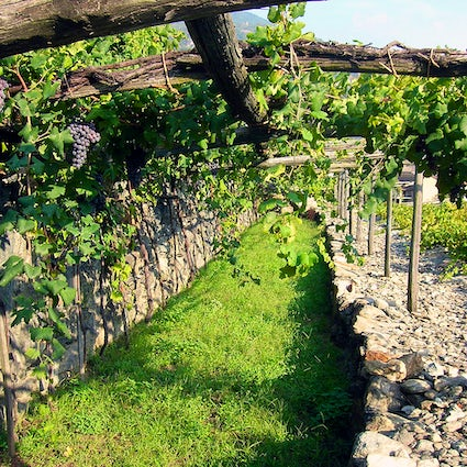 On the wine paths of Italy: Aosta