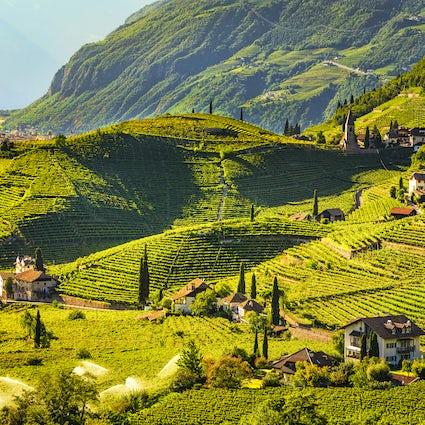 Wine roads in Sardinia: Tenuta Olianas