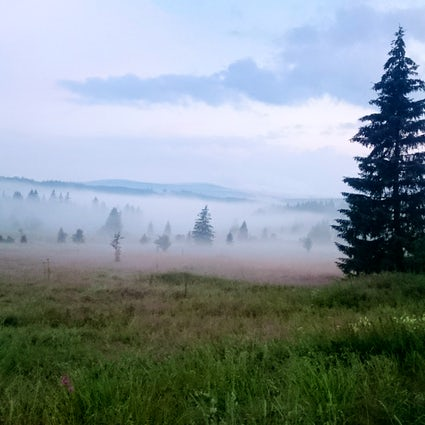 Sumava National Park - the Bohemian forest