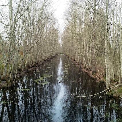 Tracking in Jelnya, einem der größten Sümpfe Europas.