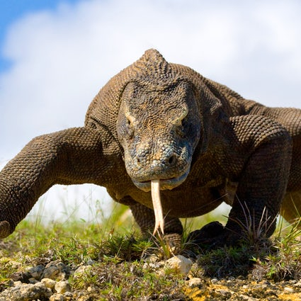 Close encounters with dragons in Komodo National Park