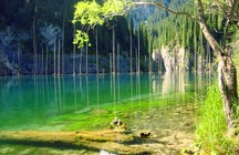 The upside-down forest in the Lake Kaindy