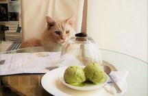 Katzen in einem Hot Tiny Café - Neko Café