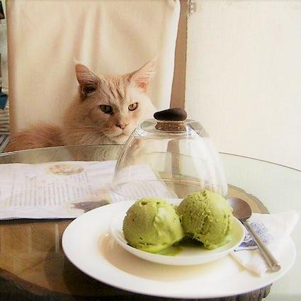 Cats in a Hot Tiny Café - Neko Café