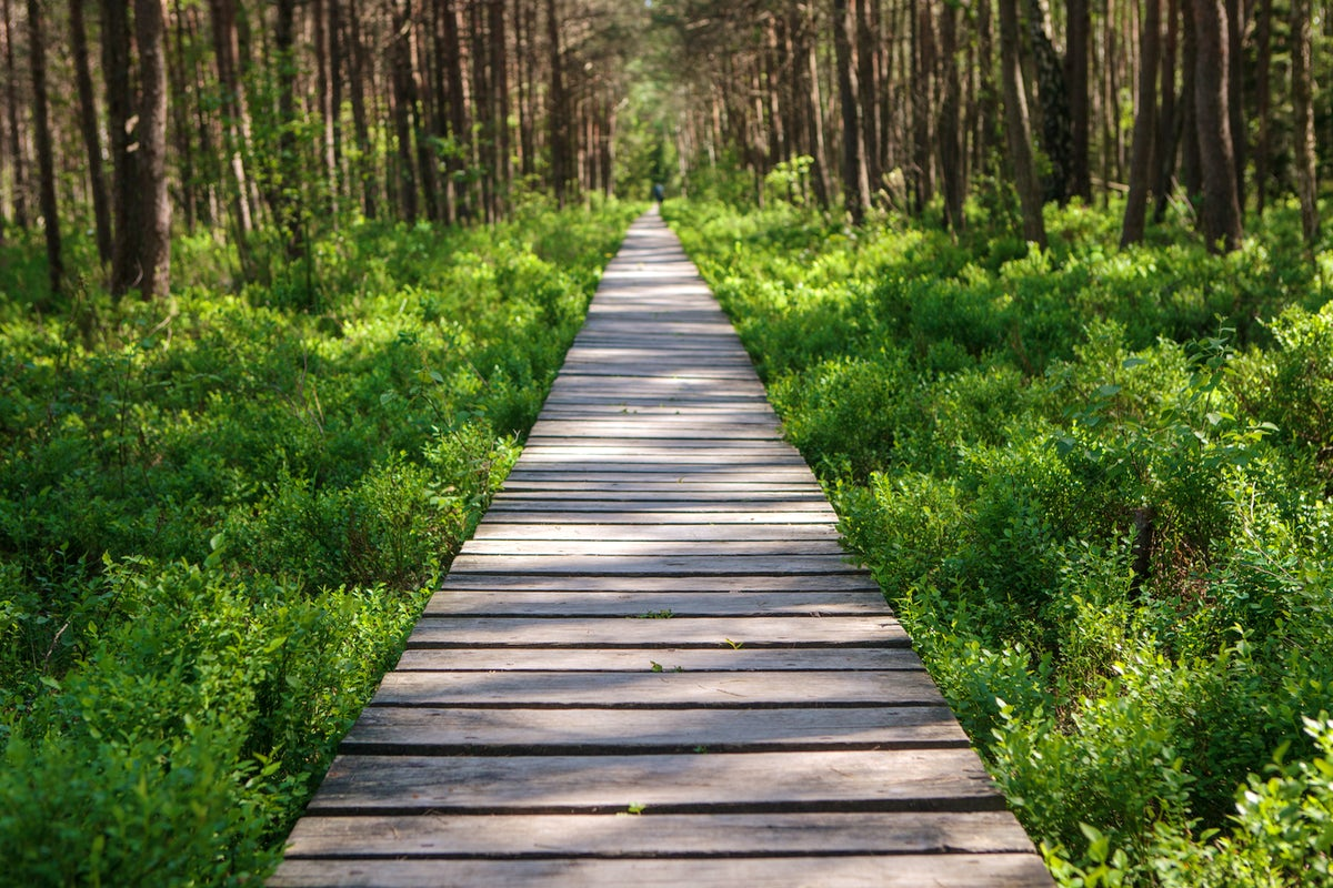 Escape into nature: the hidden walkways in Lithuania