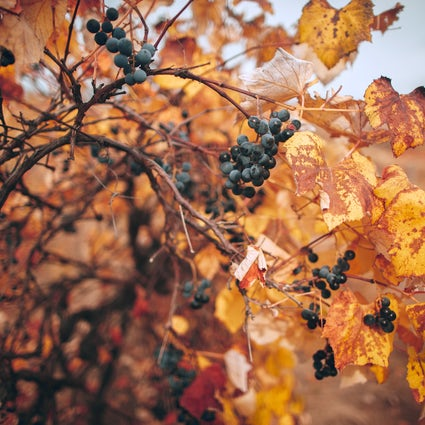 Wine routes in Moldova: three wineries to visit in autumn