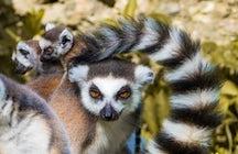 Le zoo de Vienne, le plus beau d'Europe