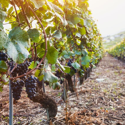 Spectacular wine routes in Cyprus