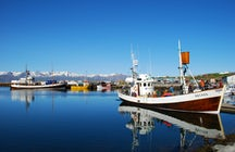 Húsavík: the whale watching capital of Iceland