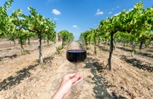 A hidden gem of Aragatsotn: Armas winery & restaurant