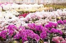 Sibirische und tropische Flora im Botanischen Garten Irkutsk