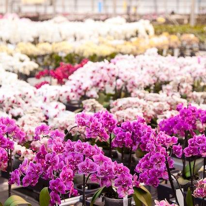 Siberische en tropische flora in de Irkoetsk Botanische Tuin