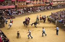 The Crazy Palio di Siena