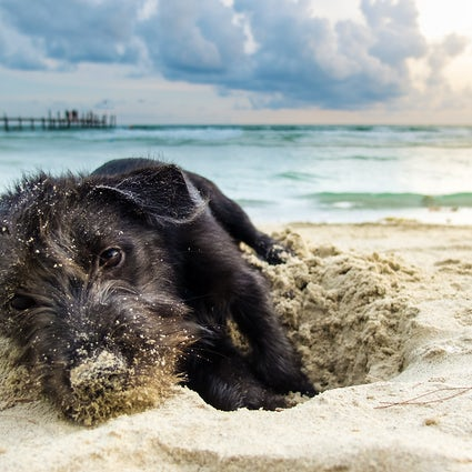 The most dog-friendly island: Sylt!