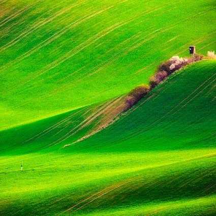 De Napa-vallei van Tsjechië