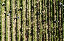 Les vins boliviens de haute altitude, à Tarija