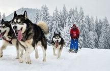 Dog sledding on Lake Baikal, wild and fun Siberian experience