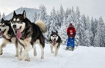 Le traîneau à chiens sur le Baïkal, une expérience sibérienne