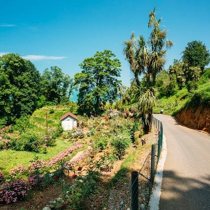 Batumi Botanische Tuin & zijn kenmerkende subtropische bloemen