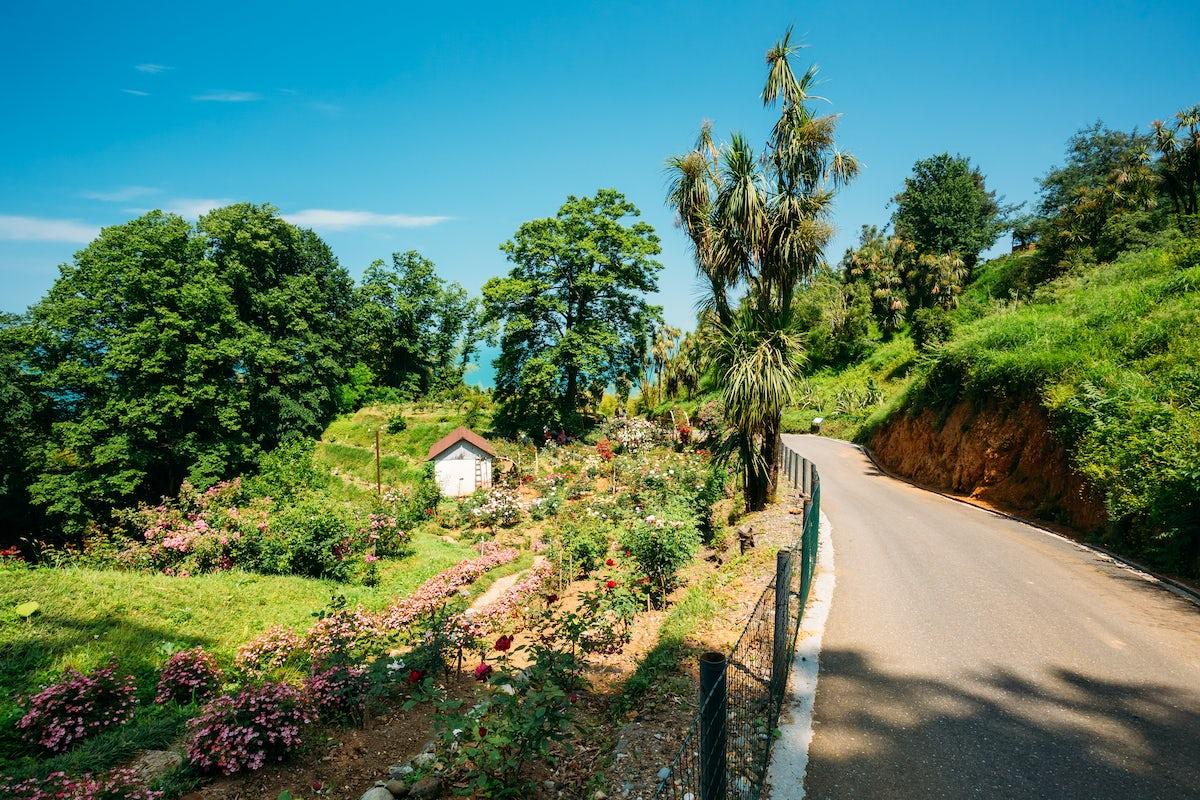 Batumi Botanical Garden & its distinct subtropical floras