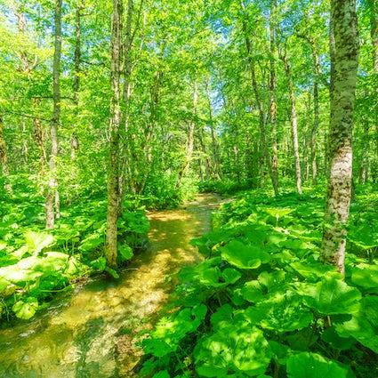All the colors of Biogradska Gora National Park
