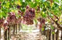 Todo lo que necesita saber sobre los vinos eslovacos