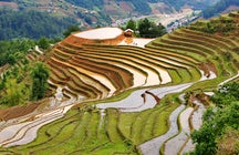 Mu Cang Chai: rice terraces & tribal culture