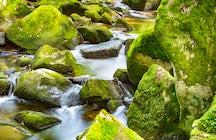 Borjomi - El agua con gas que te hace sentir parte de la naturaleza georgiana...