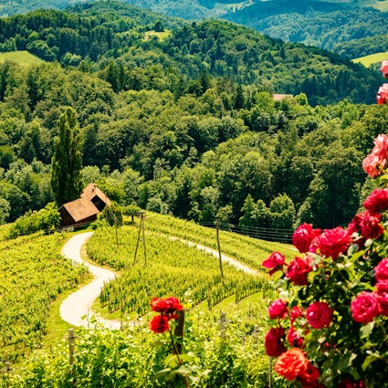 A heart-shaped road in the vineyards of Špičnik