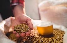 Disclosed beer making secrets in Biržai