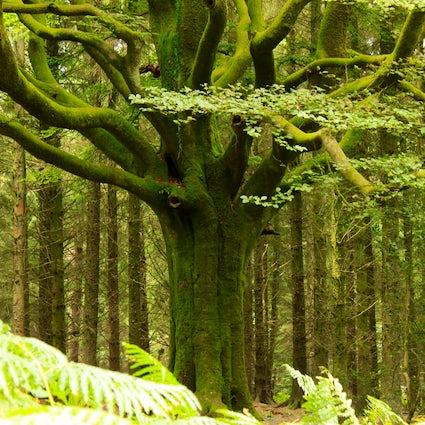 De mythische plaatsen in Bretagne: Het bos van Brocéliande
