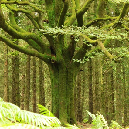 Brittany's mythical places: The Forest of Brocéliande