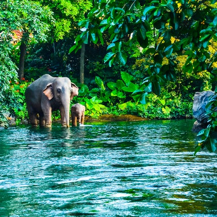 Encounter wild elephants in Thailand's Khao Yai National Park