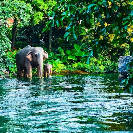 Encounter wild elephants in Thailand's Khao Yai National Park
