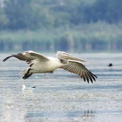 Observación de aves en el lago Atanasovsko cerca de Burgas