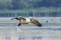 Birdwatching at Lake Atanasovsko near Burgas