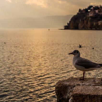 Wanneer Ohrid een thuis is