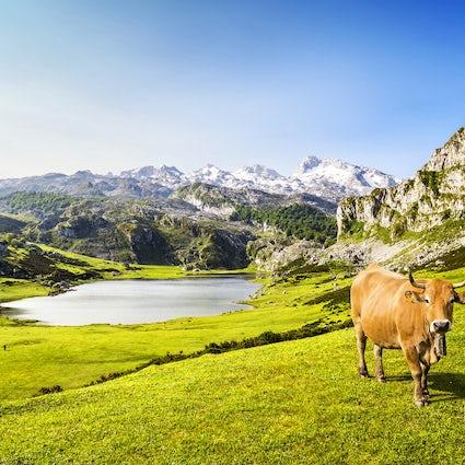 Puros Lagos de Asturias