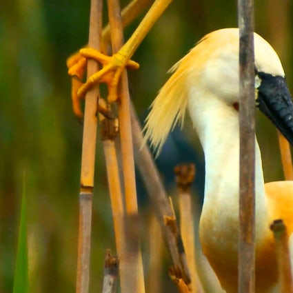 The paradise of birds - Ag Ghol National Park