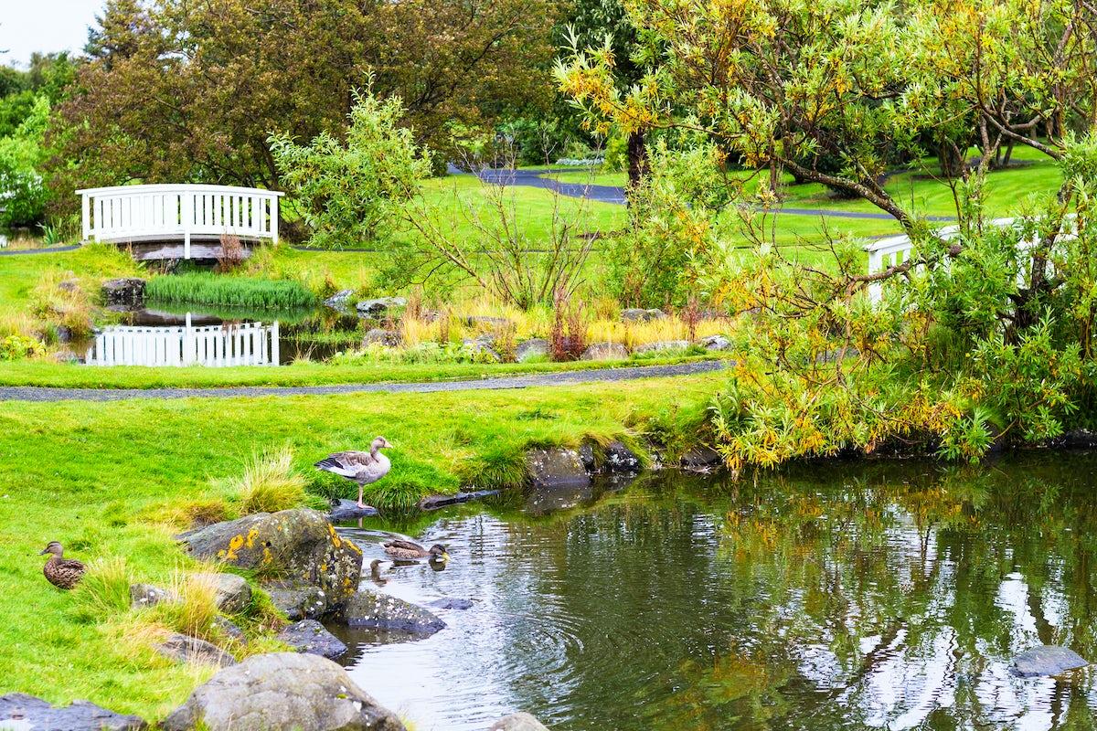 Reykjavik off the beaten track: Botanical garden