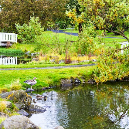 Reykjavik off the beaten track: Botanical garden