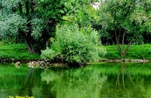 50 shades of green - Vrbas River