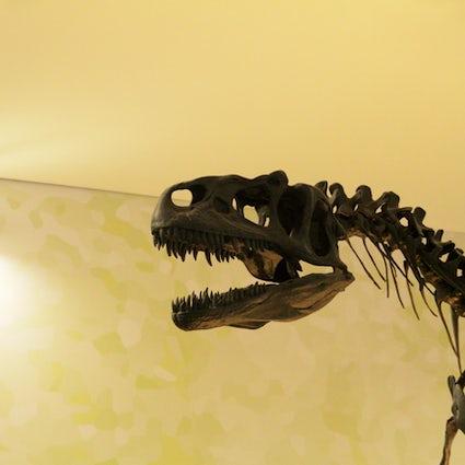 A la découverte du Musée national d'histoire naturelle de Lisbonne